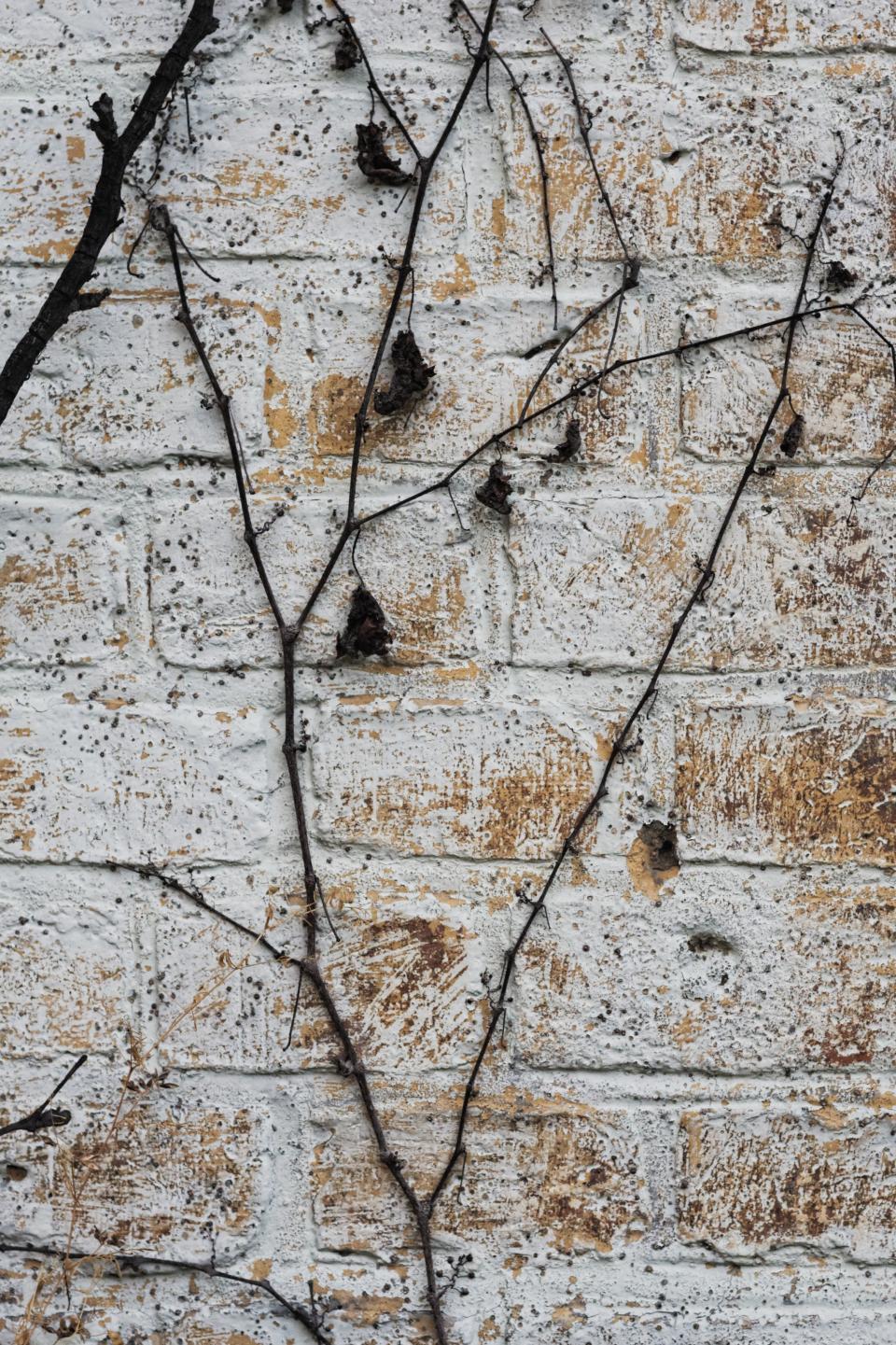 bricks, wall, vines, texture