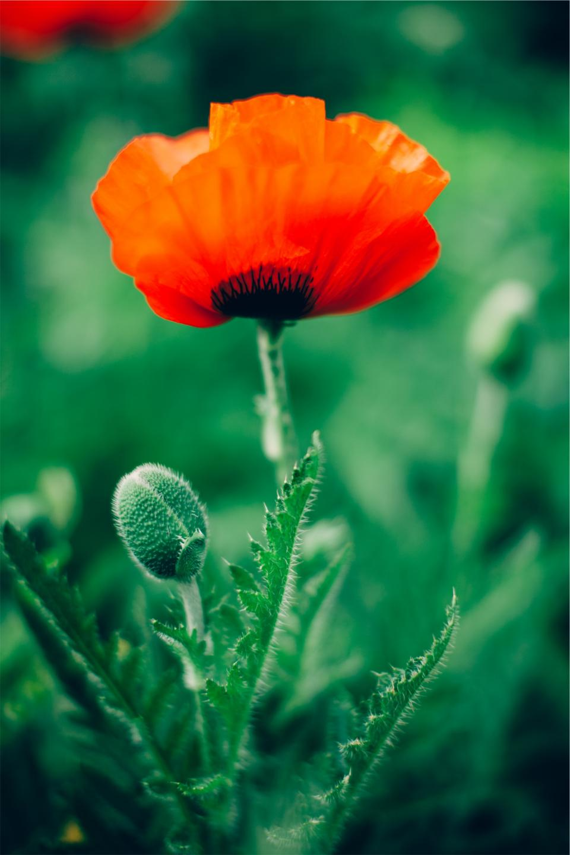 red, flower