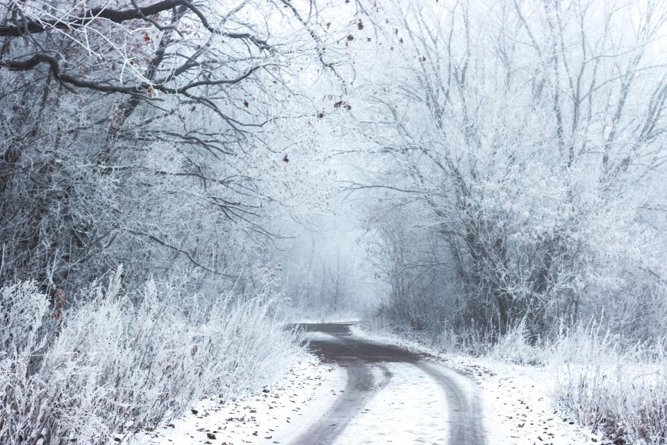 snow, winter, cold, road, rural, countryside, trees, bushes, forest, woods, nature, outdoors