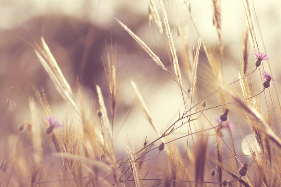 nature, field, wild, grass, flowers, harvest, sway, sky, outdoors, bokeh