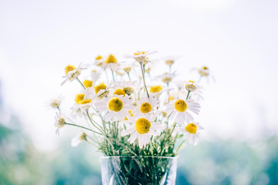 daisies, daisy, flowers, bouquet, vase, decor