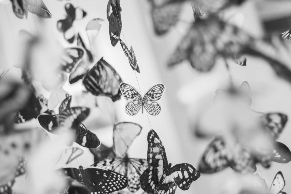 butterfly, butterflies, wings, black and white
