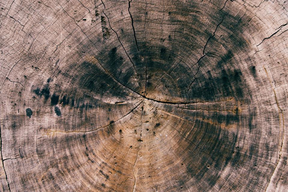 wood, log, texture, lumber
