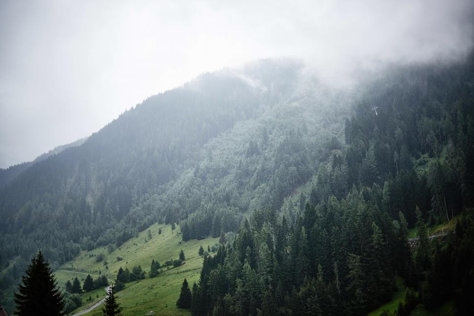 trees, forest, woods, nature, green, grass, clouds, foggy, outdoors, adventure