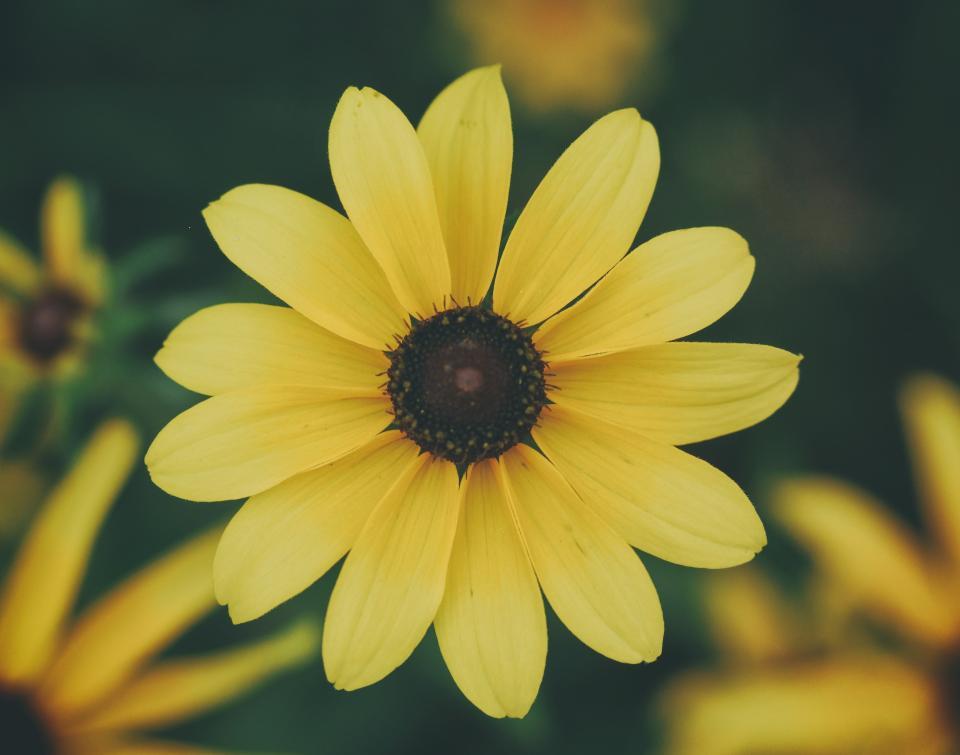 flowers, nature, blossoms, branches, stems, stalk, yellow, petals, bokeh, outdoors, garden