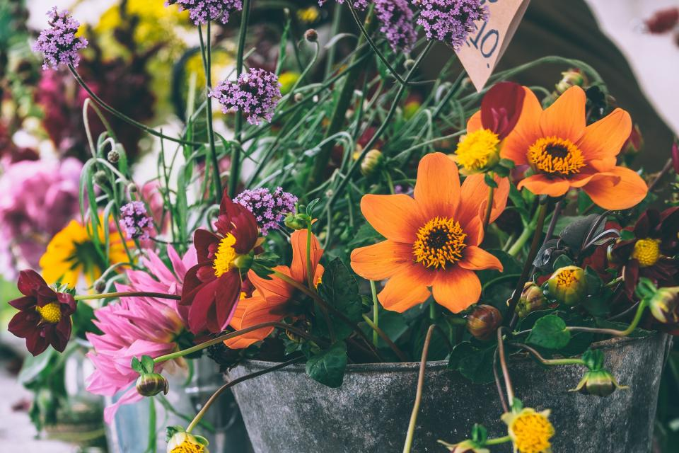 flowers, pots, garden, nature