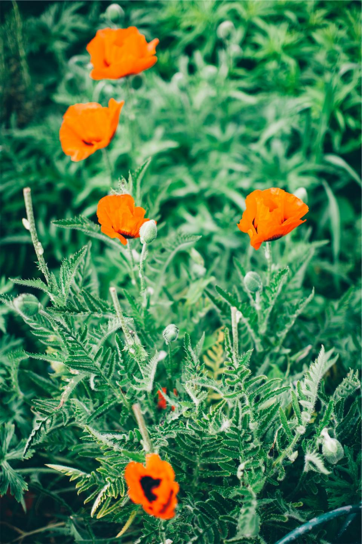flowers, green, plants, garden