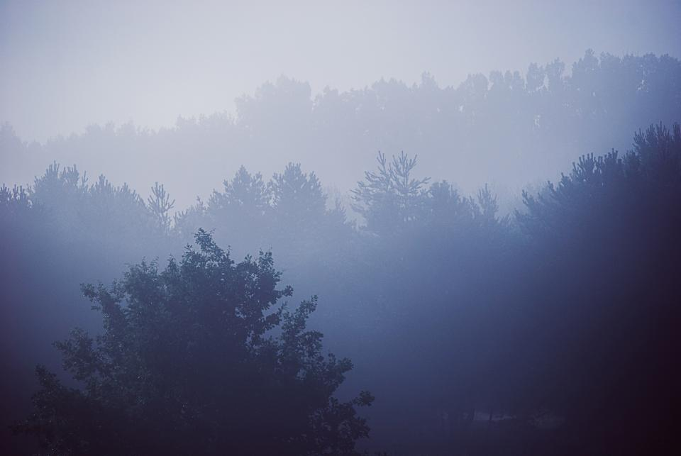 blue, trees, forest, woods, nature, landscape, foggy, sky