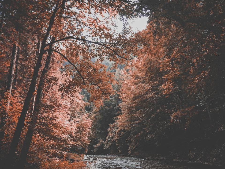nature, landscape, trees, forest, stream, river, branches, trees, lush, picturesque