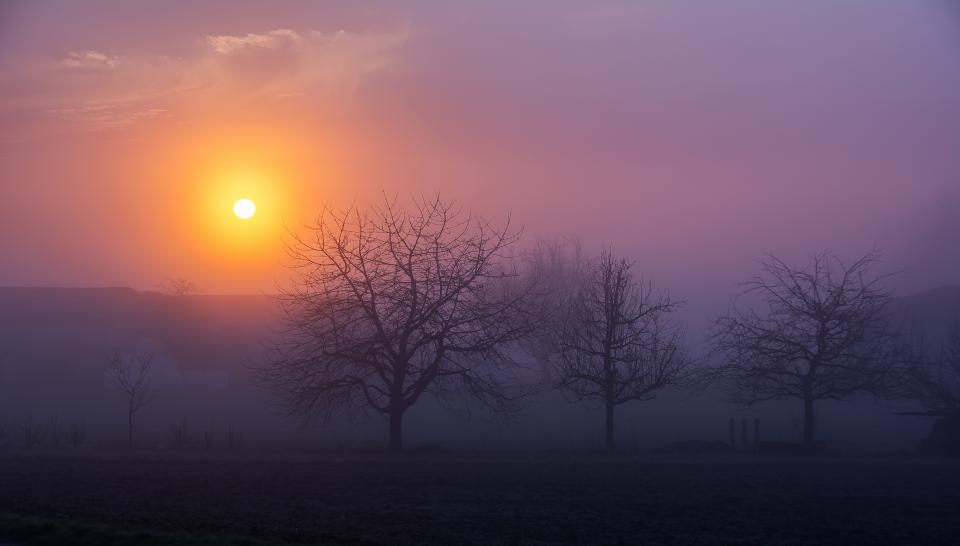 sunrise, morning, fog, foggy, trees, nature, landscape, nature, sky, clouds