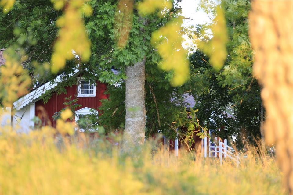 house, backyard, trees