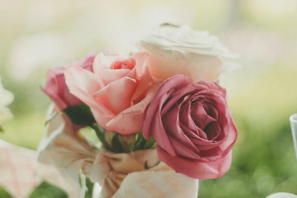 roses, flowers, bouquet, nature