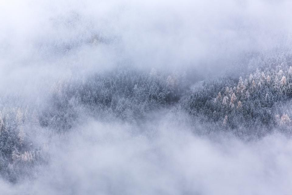 nature, landscape, forests, trees, blanket, fog, clouds