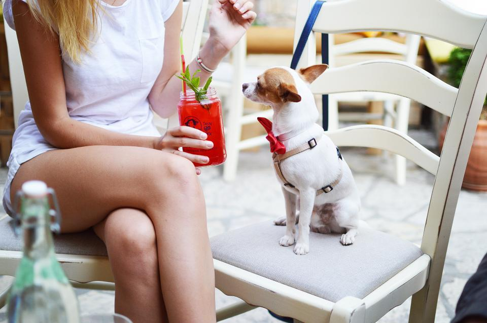 knee, legs, girl, people, dog, puppy, pet, animal, red, juice, drink, peppermint, chair, outside, cafe
